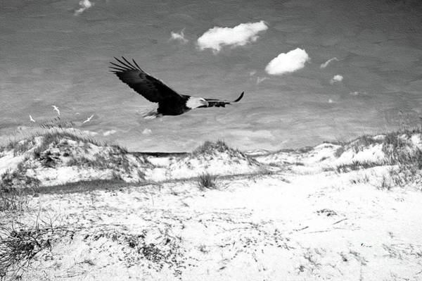 Wall Art - Photograph - Bald Eagle On Cumberland Island Bw by Laura D Young