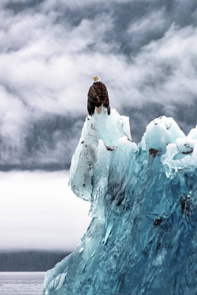 Eagle Photograph - Bald Eagle On The Glacier by Naphat Photography