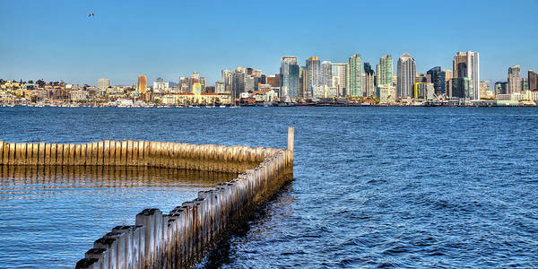 Photograph - Bald Eagle Over San Diego by David Patterson