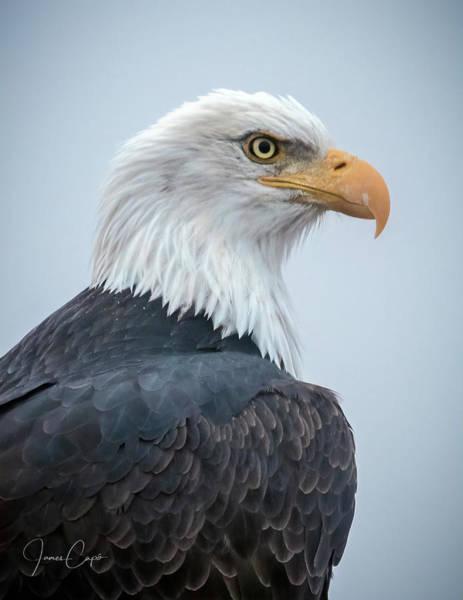 Photograph - Bald Eagle Profile by James Capo