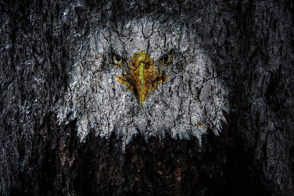 Wall Art - Photograph - Bald Eagle Tree Bark by Pelo Blanco Photo