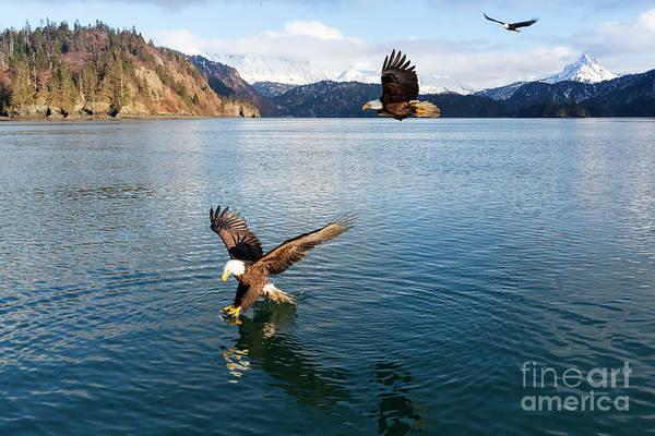Wall Art - Photograph - Bald Eagles, Haliaeetus Leucocephalus, Fishing In China Poot Bay by Louise Heusinkveld