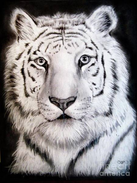 Bengal Tiger Drawing - Balderson by Carly Autumn