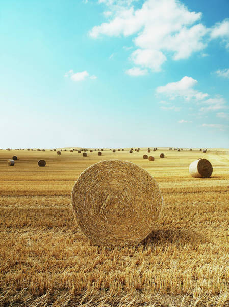 Field Photograph - Bales Of Hay In Harvested Field by Henrik Sorensen