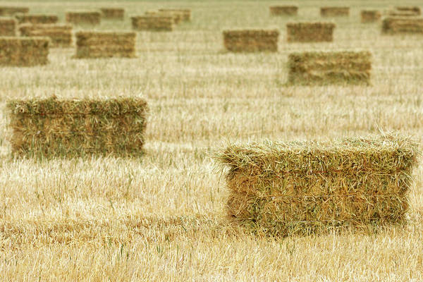 Messy Photograph - Bales Of Hay On Field by Gomezdavid