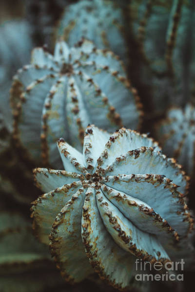Wall Art - Photograph - Ball Cactus by Colleen Kammerer