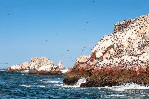 South Beach Wall Art - Photograph - Ballestas Islands, Paracas National by Ksenia Ragozina