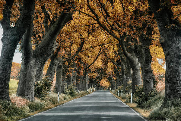 Wall Art - Photograph - Baltic Avenue Road by Joachim G Pinkawa