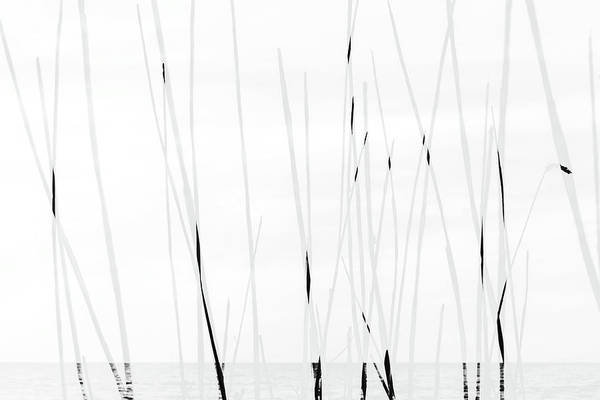 Photograph - Baltic Sea #3751 by Andrey Godyaykin