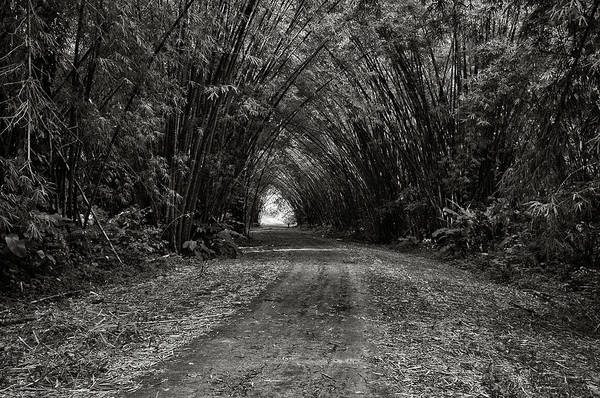 Photograph - Bamboo Cathedral I by Trinidad Dreamscape