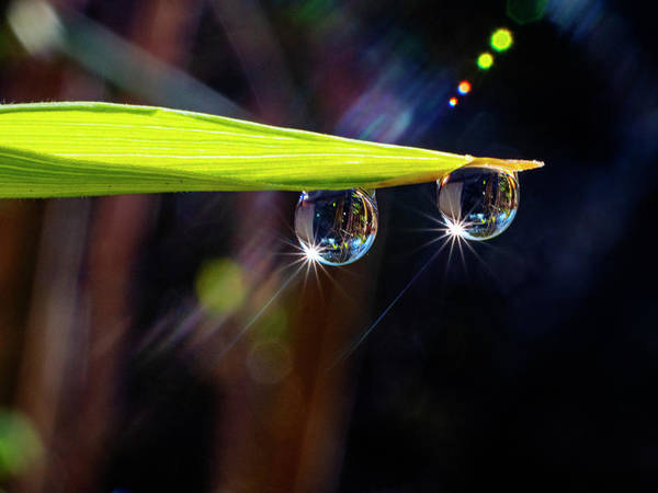 Photograph - Bamboo Dew by John Rodrigues