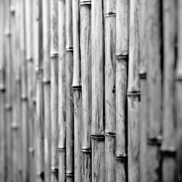 Bamboo Photograph - Bamboo Fence by George Imrie Photography