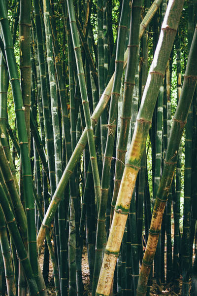 Wall Art - Photograph - Bamboo Forest Closeup by Pati Photography