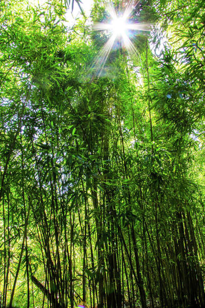 Photograph - Bamboo Forest by Dawn Richards