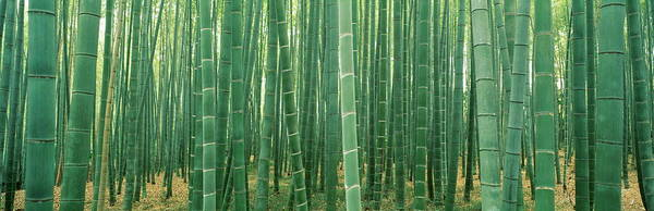 Wall Art - Photograph - Bamboo Forest, Kyoto, Japan by Chad Ehlers