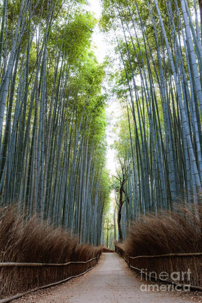 Wall Art - Photograph - Bamboo Forest, Kyoto, Japan by Matteo Colombo