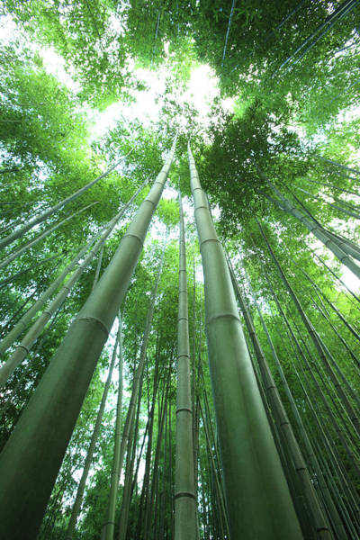 Bamboo Photograph - Bamboo Forest by Plan Shoot / Multi-bits