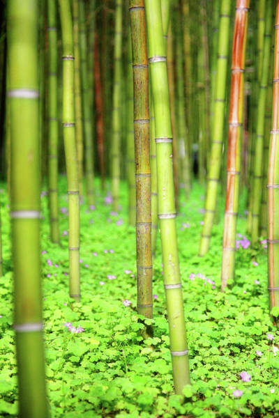 Wall Art - Photograph - Bamboo Forest by Wx Photography