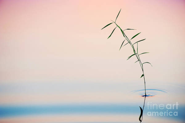 Wall Art - Photograph - Bamboo Grass Dusk by Tim Gainey