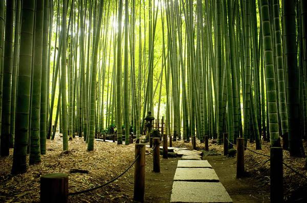 Kamakura Wall Art - Photograph - Bamboo Grove At Houkoku-ji Temple by Marser