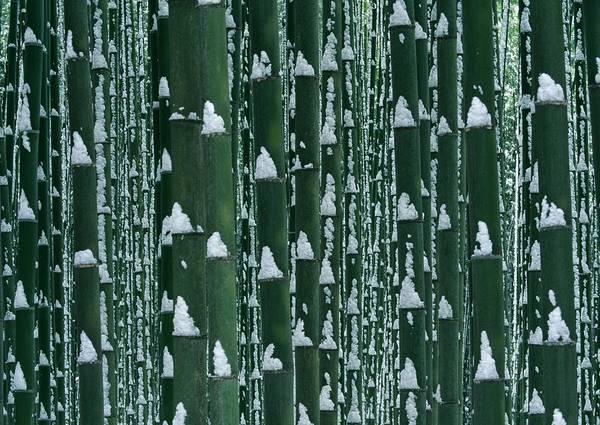 Wall Art - Photograph - Bamboo Grove In Winter by Imagenavi