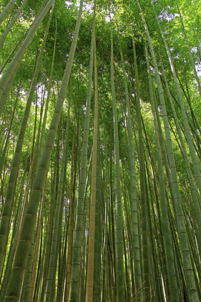 Photograph - Bamboo Grove - Kyoto, Japan by Richard Krebs