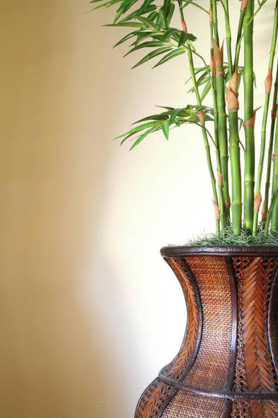 Wall Art - Photograph - Bamboo In Basket by Jpschrage