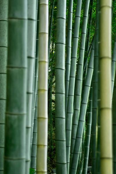 Wall Art - Photograph - Bamboo by Pixonaut