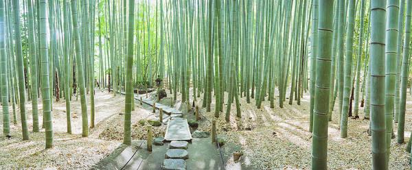 Wall Art - Photograph - Bamboo Trees At A Temple, Hokokuji by Panoramic Images
