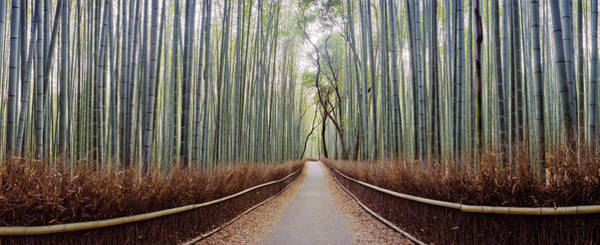 Wall Art - Photograph - Bamboo Trees In A Forest, Arashiyama by Panoramic Images