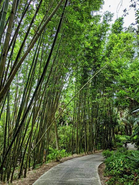 Photograph - Bamboo Walk by Portia Olaughlin