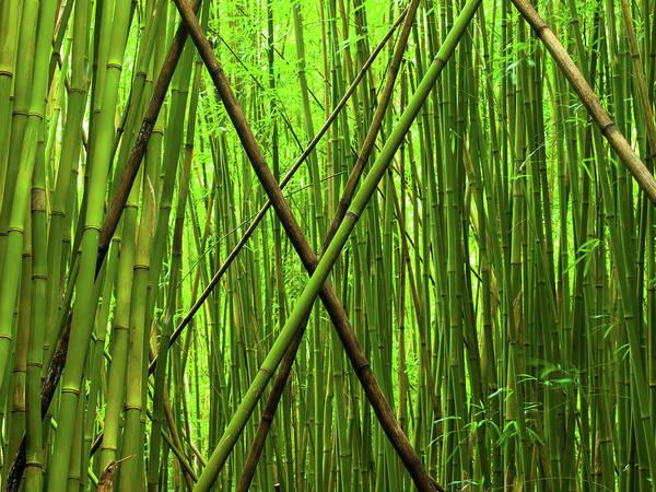 Wall Art - Photograph - Bamboo X by Christopher Johnson