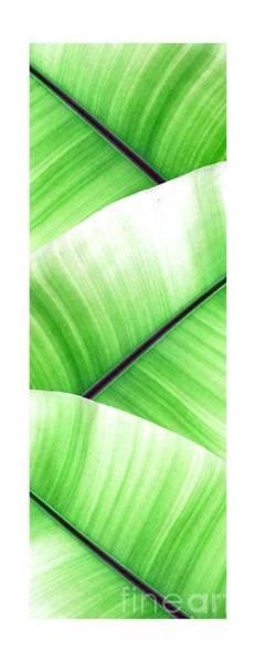 Banana Leaf Mixed Media - Banana Leaves by NAJE Foto - Nelly Rodriguez