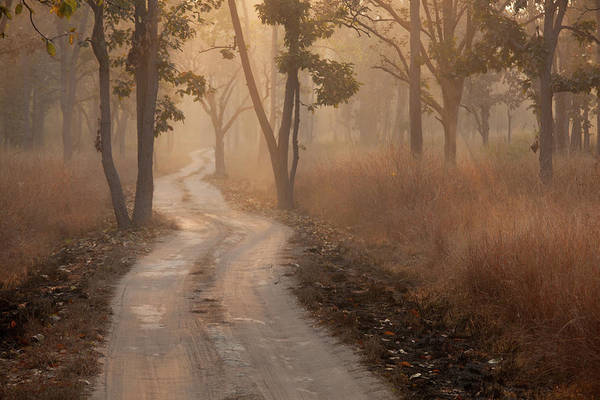 Thoroughfare Photograph - Bandhavgarh National Park, India by Mint Images - Art Wolfe
