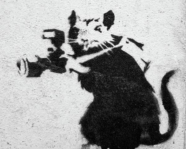 Photograph - Banksy Rat With Camera by Gigi Ebert