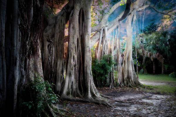 Photograph - Banyan Ft Lauderdale by Evie Carrier