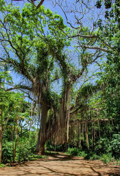 Photograph - Banyan Tree In Honolua Bay by Anthony Jones