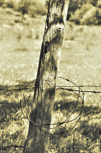 Photograph - Barbed by JAMART Photography