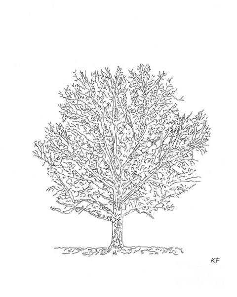 Drawing - Bare Branches 2 - A Pen And Ink Drawing by Kerri Farley