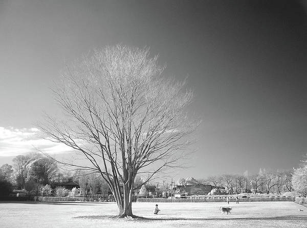 Theme Park Photograph - Bare Frozen Tree In Winter by Yaplan