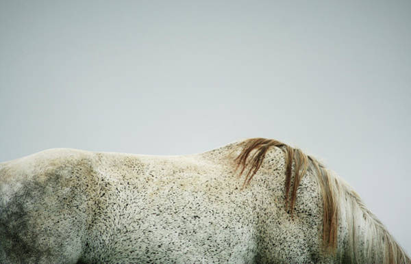 Horse Photograph - Bare Horse Back by Saulgranda