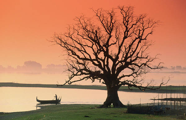 Waters Edge Photograph - Bare Tree And Boat On Edge Of by Anders Blomqvist