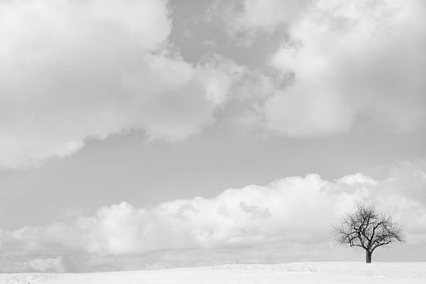Charlevoix Photograph - Bare Tree And Clouds In Snowy Landscape by Chris Clor