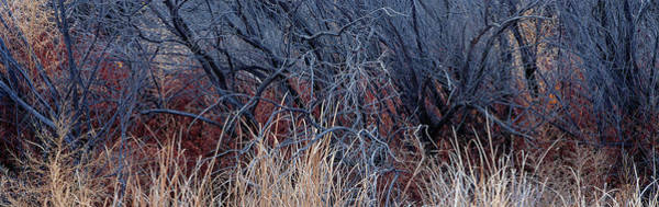 Wall Art - Photograph - Bare Trees In A Forest, Bosque Del by Panoramic Images
