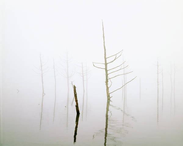 Wall Art - Photograph - Bare Trees In A Lake, Megam, Nagano by Panoramic Images