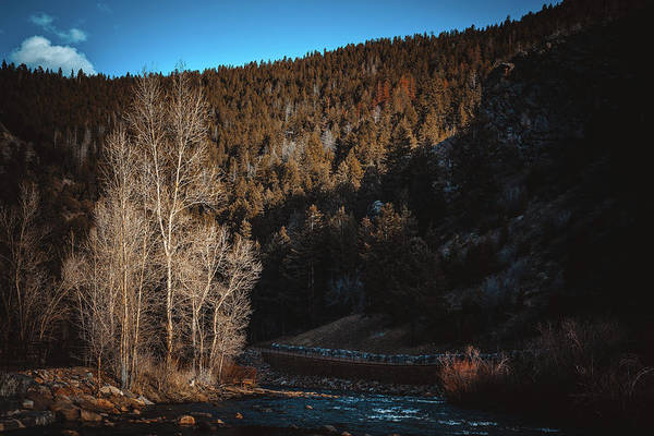 Photograph - Bare Trees In Clear Creek Canyon by Jeanette Fellows