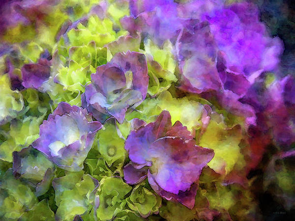 Photograph - Barely Purple 9080 Idp_2 by Steven Ward