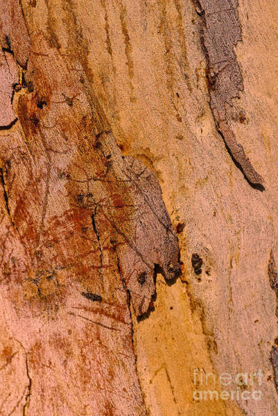 Photograph - Bark Art Natures Gum by Joy Watson