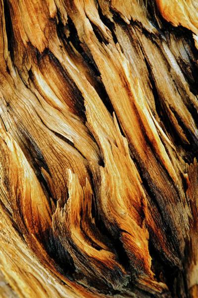 Wall Art - Photograph - Bark Close-up Of Ancient Bristlecone by Adam Jones