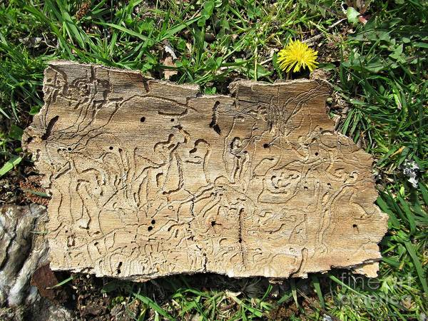 Photograph - Bark, Dandelion And Grass by Chani Demuijlder